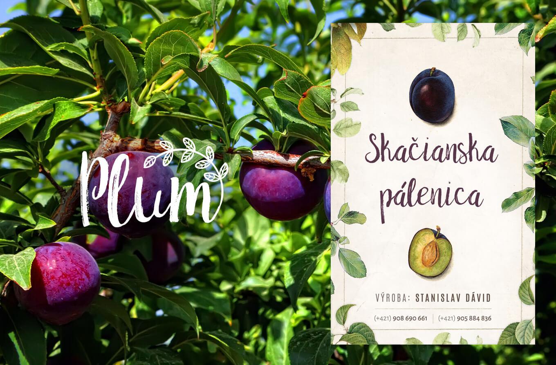 Botanical bottle label design. Traditional european Distillery. Plum